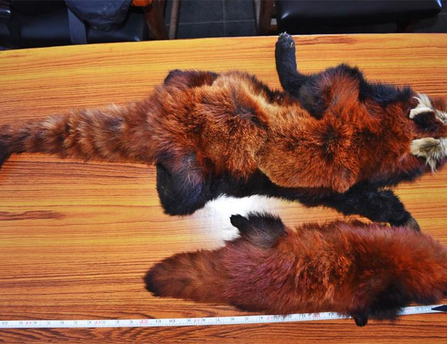 One arrested with red panda skin