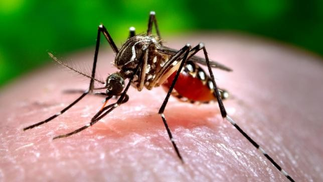 197 confirmed with dengue fever in Bhaktapur